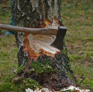 cut-tree-1716671_1280
